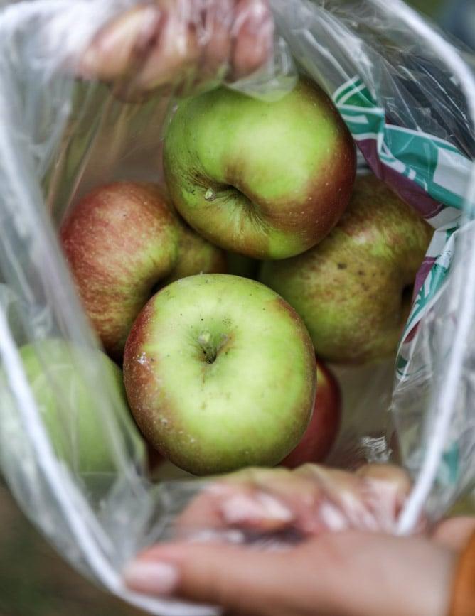 apple picking I howsweeteats.com