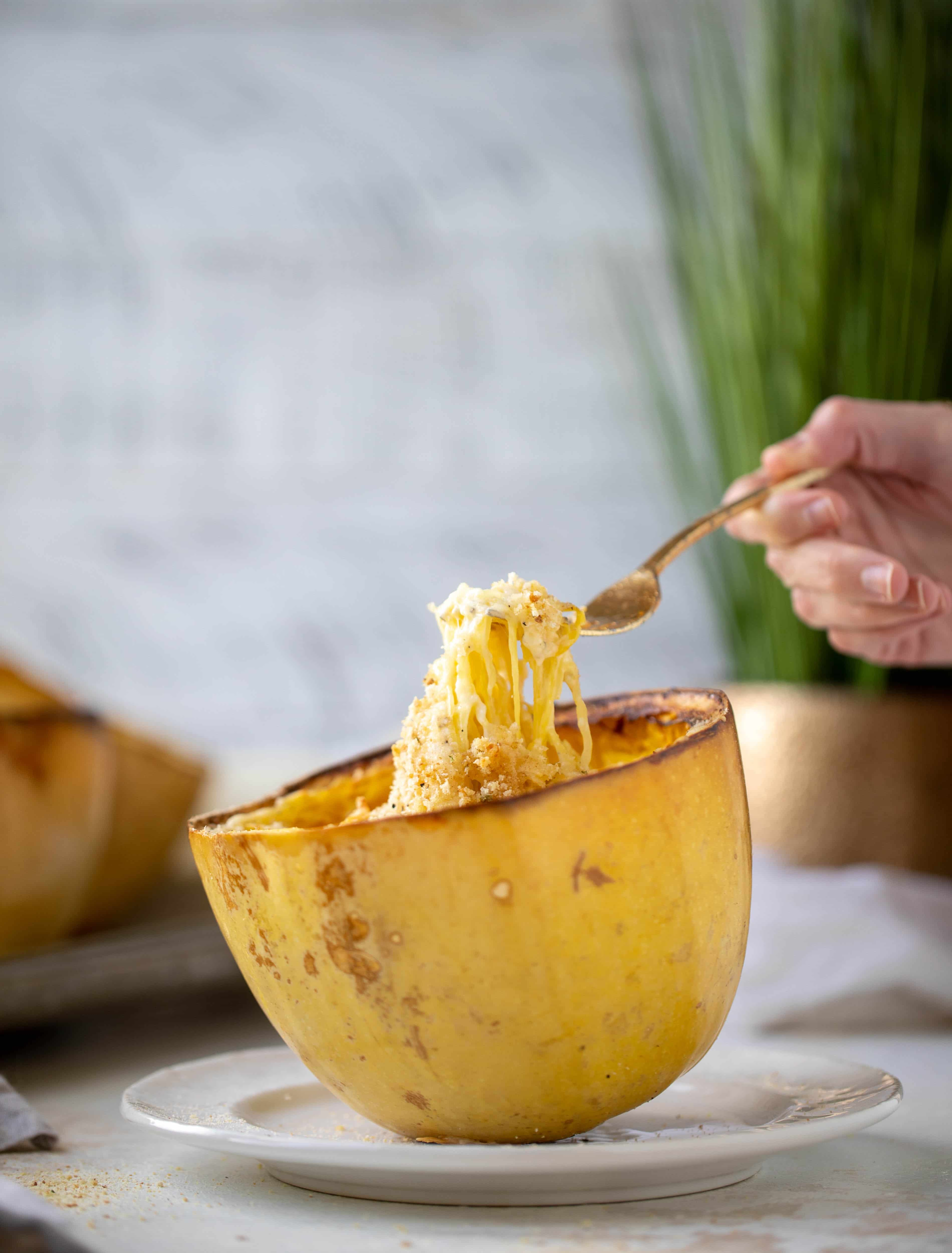 Three cheese spaghetti squash in a squash bowl! Squash tossed with fontina, gruyere and parmesan to make a creamy comforting meal.