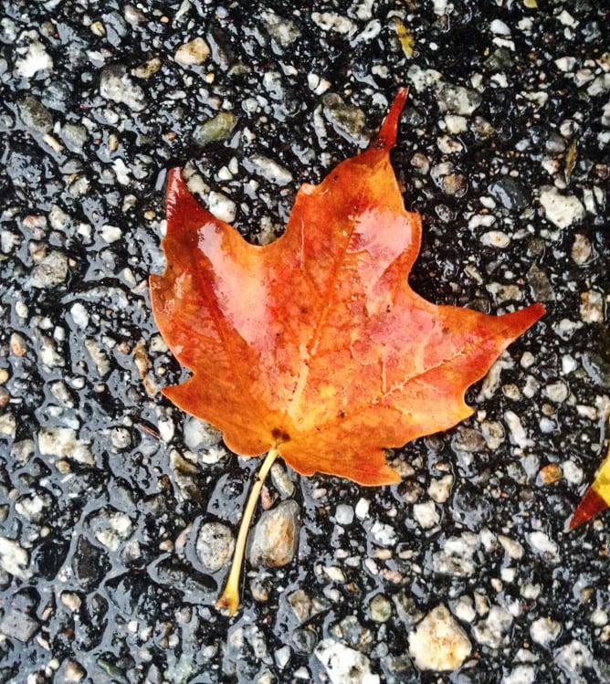 a rainy new hampshire autumn day I howsweeteats.com